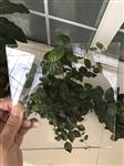 邢台|河北硼硅beplay官方授权厂家报价