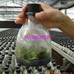 厂家批发各种菌培花瓶