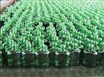 东北地区辽宁、吉林、长春地区绿色白菜送彩金网站大全、白酒瓶