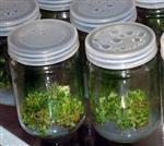 虫草种植菌苗瓶