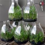 植物培养瓶