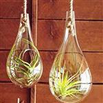 花瓶悬挂微景观015