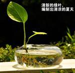 扁球型花器102