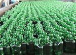 陕西地区绿色玻璃瓶
