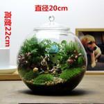 高硼硅微景观生态玻璃瓶