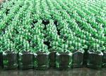枣庄最大玻璃瓶生产厂家  枣庄福兴玻璃