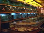 广州天河定做海鲜池,广州制作鱼池,广州定做海鲜鱼池,海鲜鱼缸