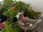 小鸟皇冠浇花器
