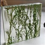夹植物玻璃 夹树枝干花玻璃 广州同民厂家