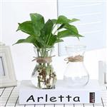 现货批发水培玻璃花瓶风信子玻璃瓶支持加工定制