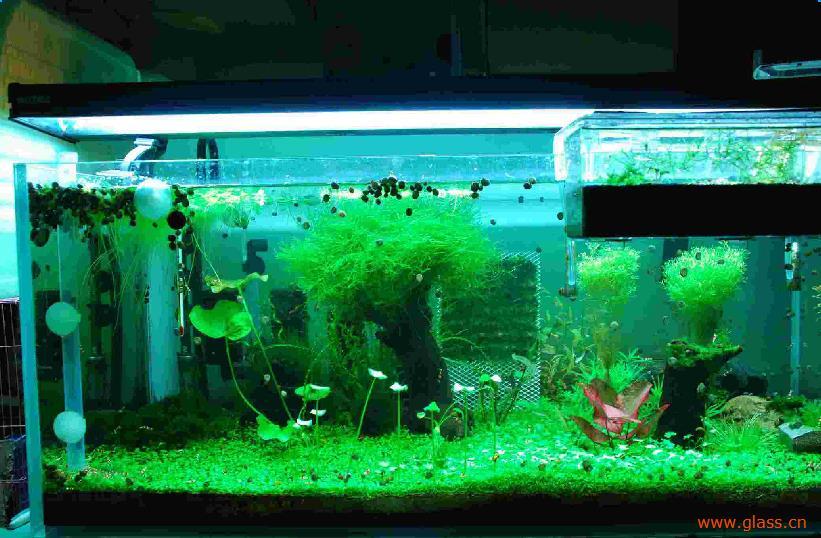 亲自动手制作玻璃鱼缸的方法