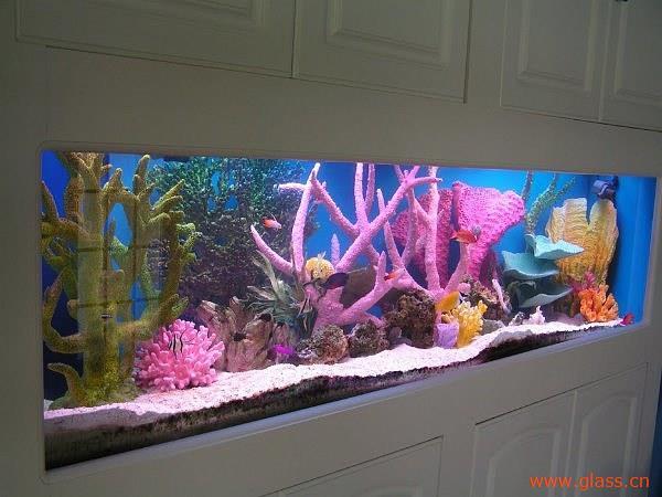 鱼缸可不可以选用钢化玻璃?