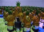 红酒塞水果花朵系列厂家供应