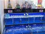 东莞|东莞海鲜池鱼缸制作工程