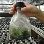 玻璃瓶350ml组培瓶 240ml虫草瓶菌瓶植物育苗培养专业瓶