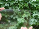 防眩AG玻璃