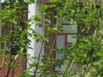内置中空百叶居住建筑标准化外窗系统应用技术规程