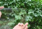 防刺眼玻璃