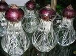 水培风信子花瓶 玻璃瓶