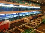 荔湾黄沙海鲜玻璃缸