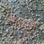 青岛天然水洗石英砂