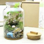 高硼硅微景观生态瓶
