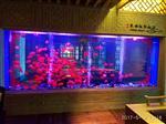 上海鱼缸定做大型水族工程制作