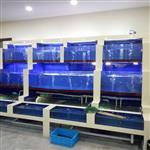 佛山大沥哪里定做玻璃海鲜池,南海区玻璃鱼缸亚克力鱼缸厂家