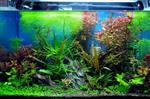 广州鱼缸水草造景公司,水草怎么造景设计好看