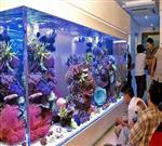 亚克力鱼缸哪里好,广州哪里定做亚克力观赏鱼缸
