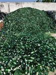 广东旧玻璃瓶回收