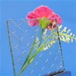嘉颢夹丝玻璃拼音