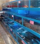深圳海鲜池订做价格