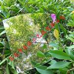 厂家专业生产亚克力有机玻璃板 亚克力透明板