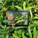 2mm黑色边框丝印AG玻璃 深圳AG防眩光显示器玻璃