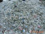 广东回收废玻璃瓶