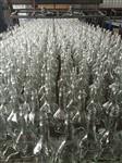 山东玻璃瓶 酱油醋瓶