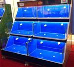 深圳龙华海鲜鱼池供应商|深圳龙华海鲜鱼池批发|深圳龙华鱼缸